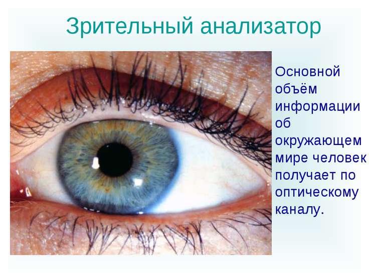 Зрительный анализатор Основной объём информации об окружающем мире человек по...