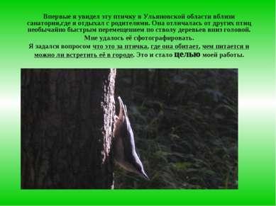 Впервые я увидел эту птичку в Ульяновской области вблизи санатория,где я отды...