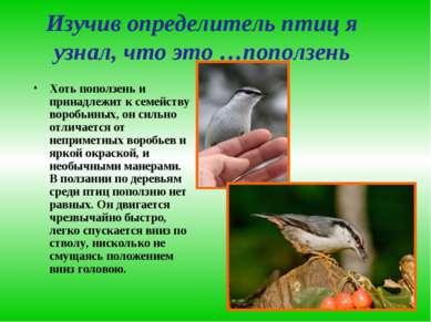 Изучив определитель птиц я узнал, что это …поползень Хоть поползень и принадл...