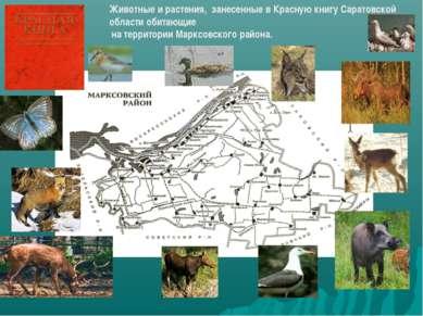 Животные и растения, занесенные в Красную книгу Саратовской области обитающие...