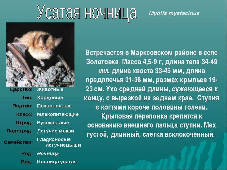 Встречается в Марксовском районе в селе Золотовка. Масса 4,5-9 г, длина тела ...