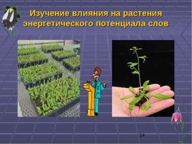 Изучение влияния на растения энергетического потенциала слов