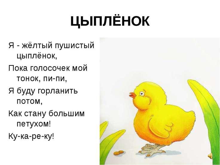 ЦЫПЛЁНОК Я - жёлтый пушистый цыплёнок, Пока голосочек мой тонок, пи-пи, Я буд...