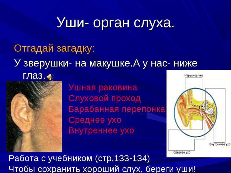 Уши- орган слуха. Отгадай загадку: У зверушки- на макушке.А у нас- ниже глаз....
