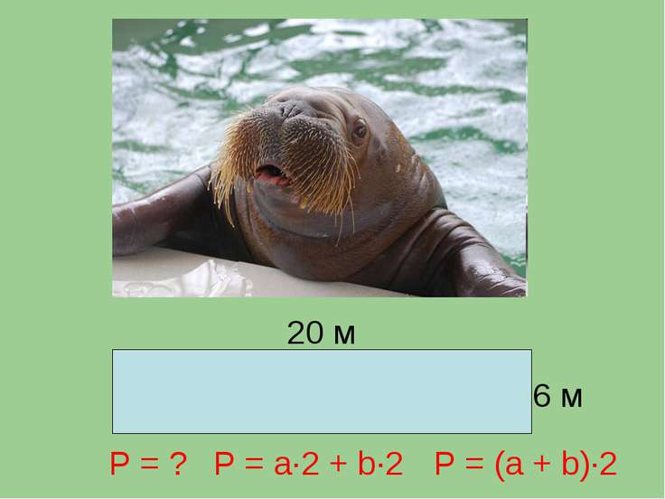 20 м 6 м Р = ? P = a∙2 + b∙2 P = (a + b)∙2