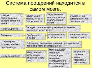 Система поощрений находится в самом мозге. Нижняя тегментальная область средн...
