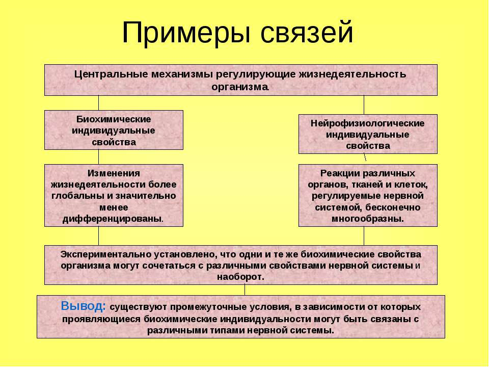 Примеры связей Центральные механизмы регулирующие жизнедеятельность организма...