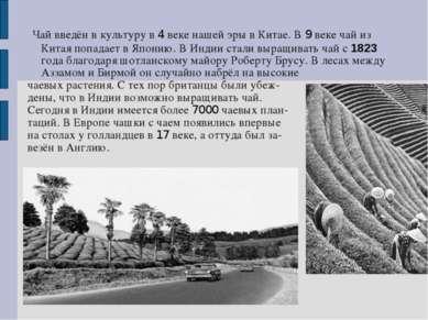 Чай введён в культуру в 4 веке нашей эры в Китае. В 9 веке чай из Китая попад...