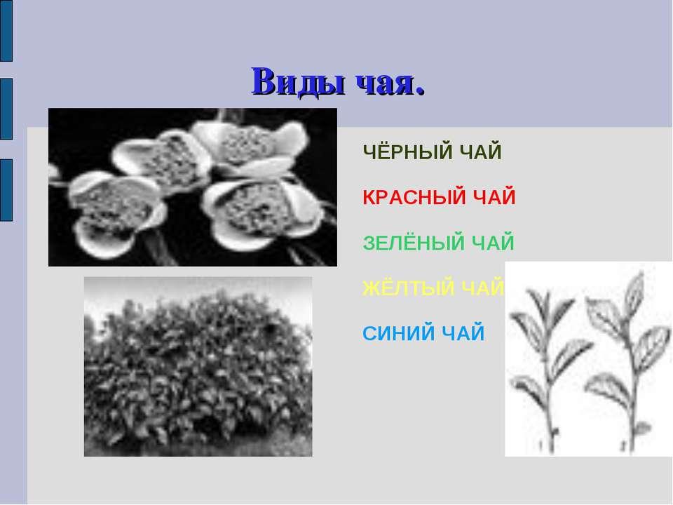 Виды чая. ЧЁРНЫЙ ЧАЙ КРАСНЫЙ ЧАЙ ЗЕЛЁНЫЙ ЧАЙ ЖЁЛТЫЙ ЧАЙ СИНИЙ ЧАЙ