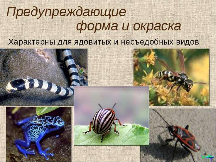 Предупреждающие форма и окраска Характерны для ядовитых и несъедобных видов