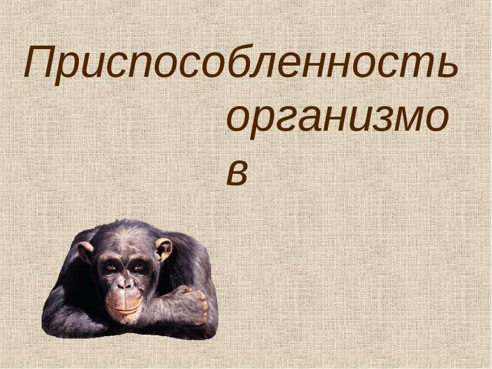 Приспособленность организмов