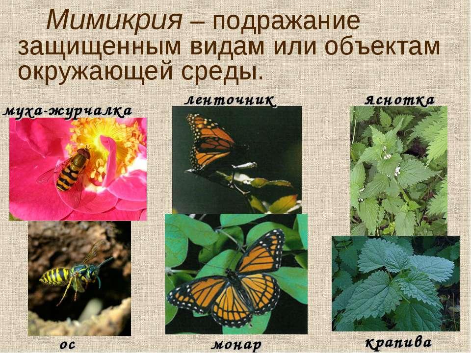 Мимикрия – подражание защищенным видам или объектам окружающей среды. муха-жу...