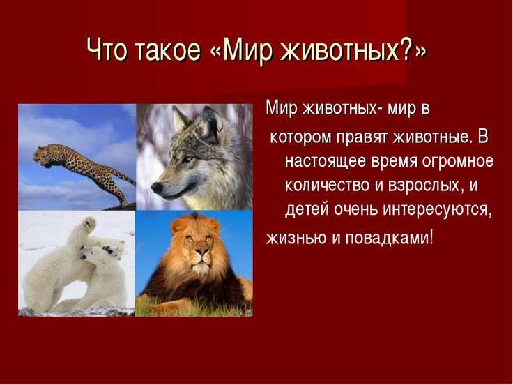 Что такое «Мир животных?» Мир животных- мир в котором правят животные. В наст...