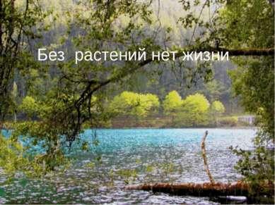 Без растений нет жизни