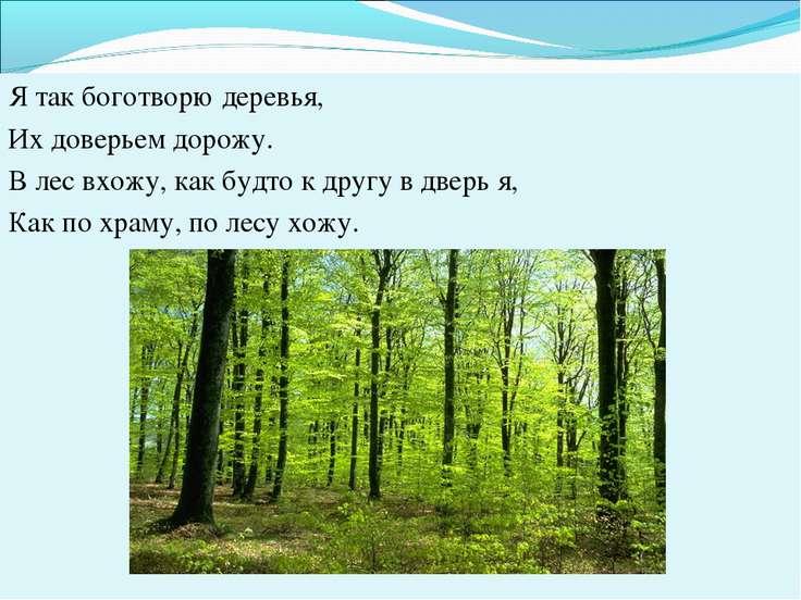 Я так боготворю деревья, Их доверьем дорожу. В лес вхожу, как будто к другу в...