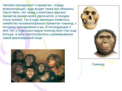 Человек принадлежит к приматам - отряду млекопитающих, куда входят также все ...