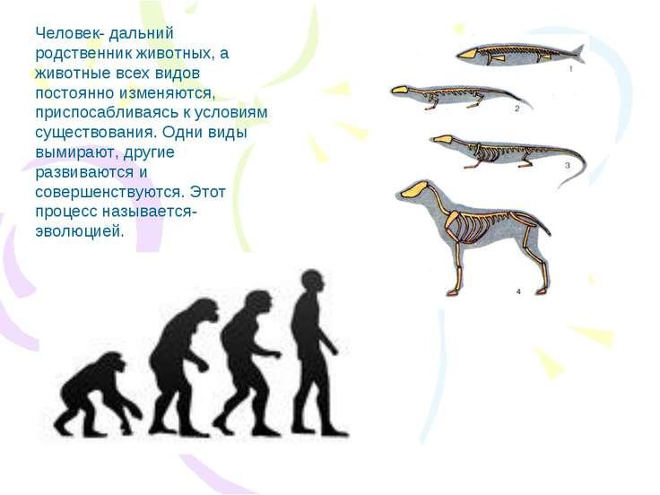 Человек- дальний родственник животных, а животные всех видов постоянно изменя...