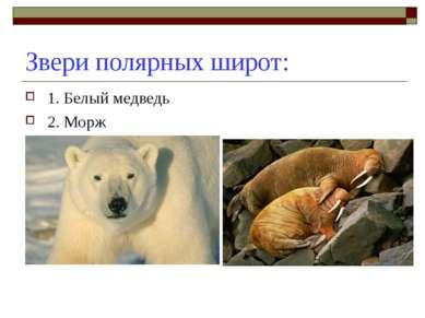 Звери полярных широт: 1. Белый медведь 2. Морж