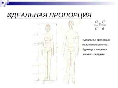 ИДЕАЛЬНАЯ ПРОПОРЦИЯ Идеальная пропорция называется каноном. Единица измерения...