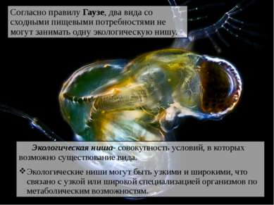 Экологическая ниша- совокупность условий, в которых возможно существование ви...
