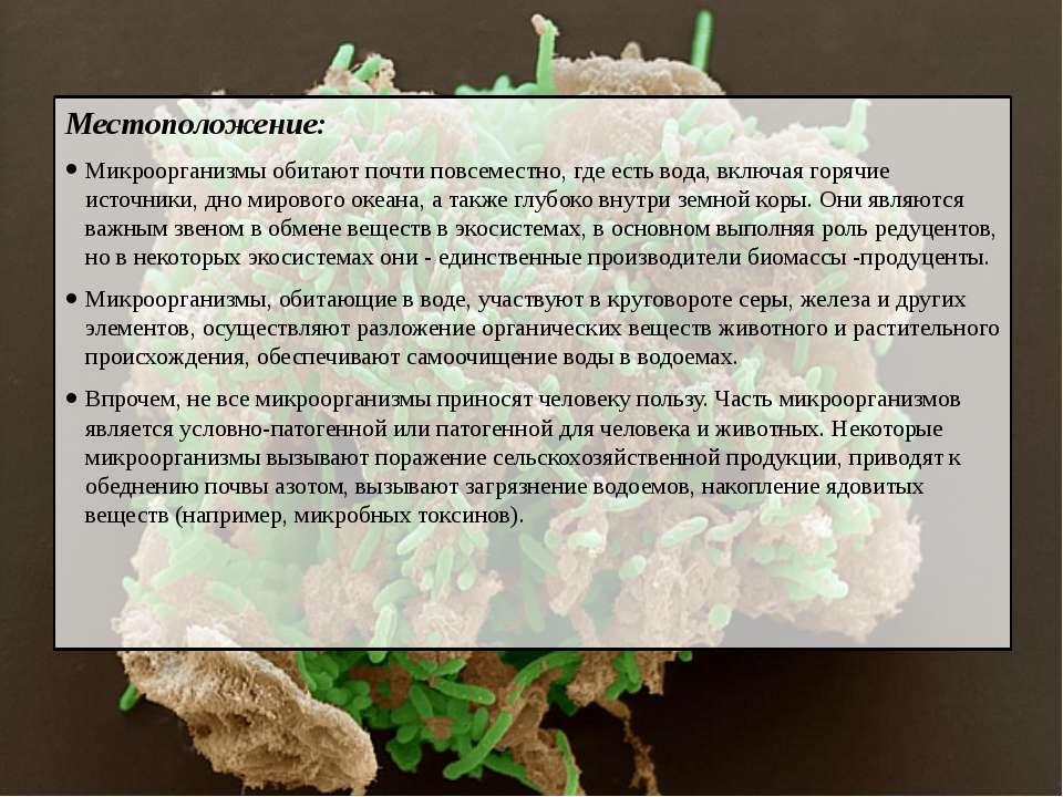 Местоположение: Микроорганизмы обитают почти повсеместно, где есть вода, вклю...
