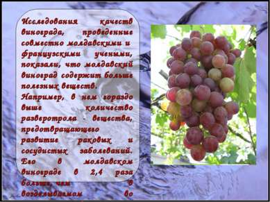 Исследования качеств винограда, проведенные совместно молдавскими и француз...