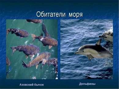 Обитатели моря Дельфины Азовский бычок