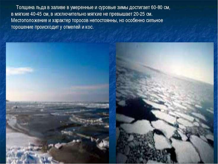 Толщина льда в заливе в умеренные и суровые зимы достигает 60-80 с...