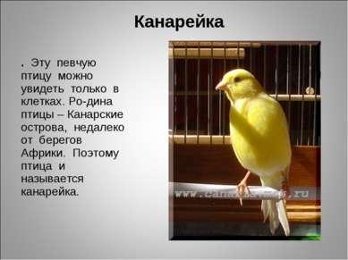 Канарейка . Эту певчую птицу можно увидеть только в клетках. Ро-дина птицы – ...
