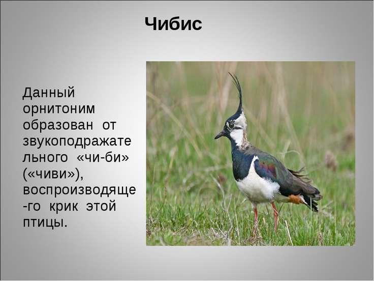 Чибис Данный орнитоним образован от звукоподражательного «чи-би» («чиви»), во...