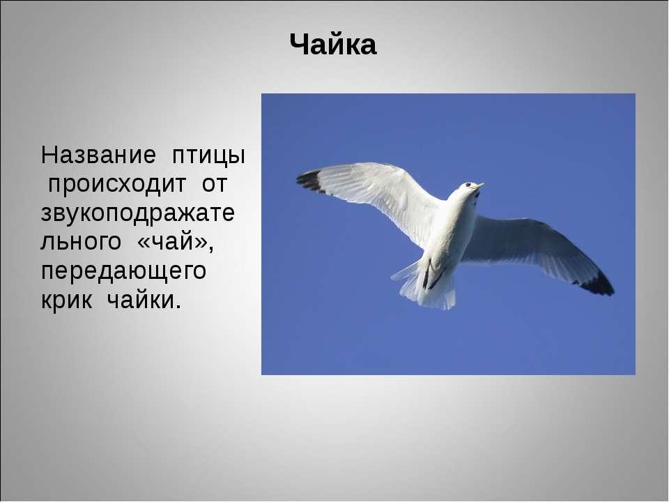 Чайка Название птицы происходит от звукоподражательного «чай», передающего кр...