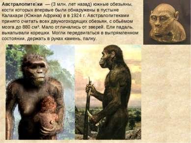 Австралопите ки — (3 млн. лет назад) южные обезьяны, кости которых впервые б...