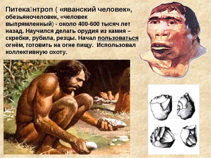 Питека нтроп ( «яванский человек», обезьяночеловек, «человек выпрямленный)- ...