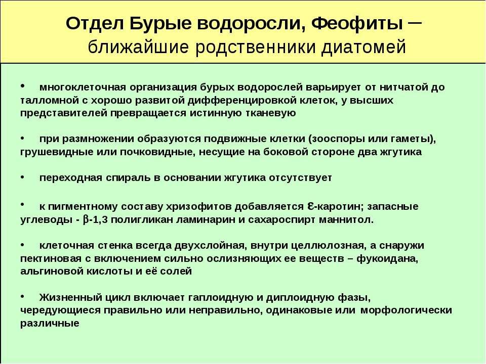 Отдел Бурые водоросли, Феофиты – ближайшие родственники диатомей многоклеточн...