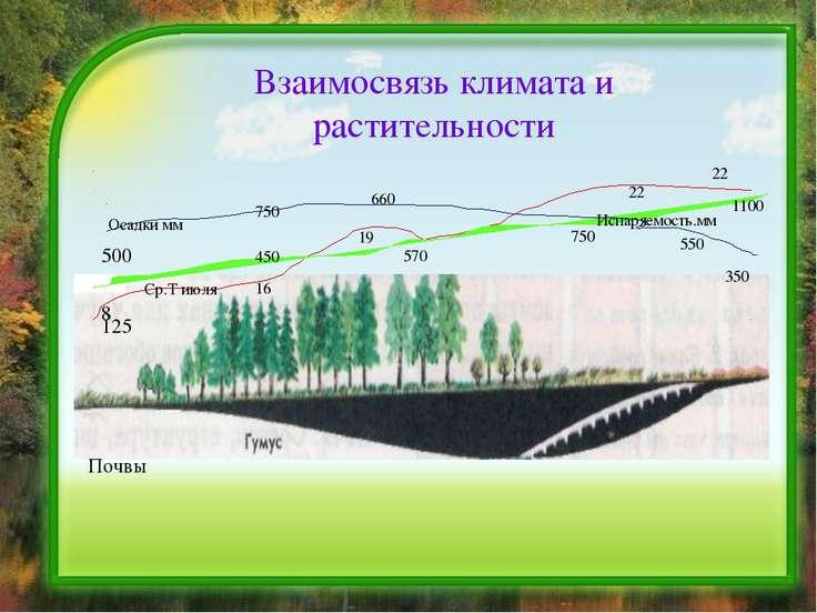 Взаимосвязь климата и растительности 125 8 500 Осадки мм Ср.Т июля Испаряемос...