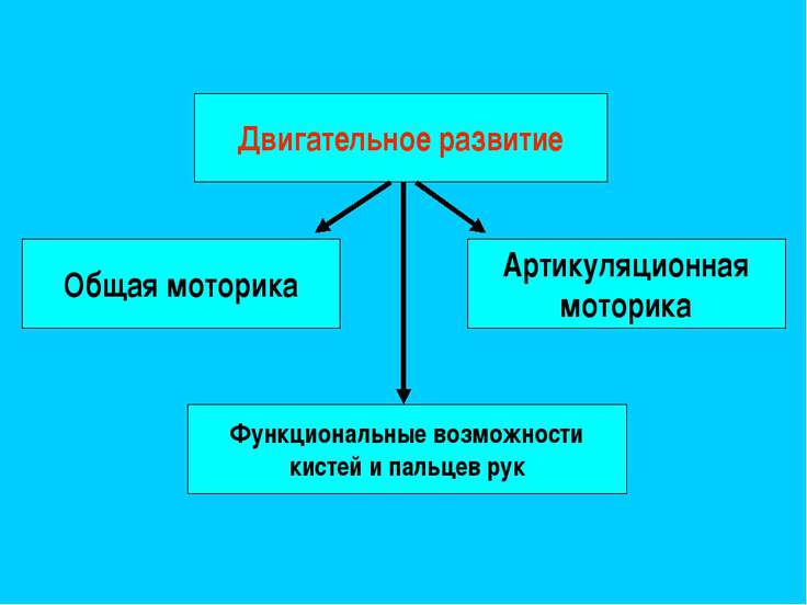 Двигательное развитие Общая моторика Функциональные возможности кистей и паль...