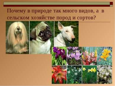 * Почему в природе так много видов, а в сельском хозяйстве пород и сортов?
