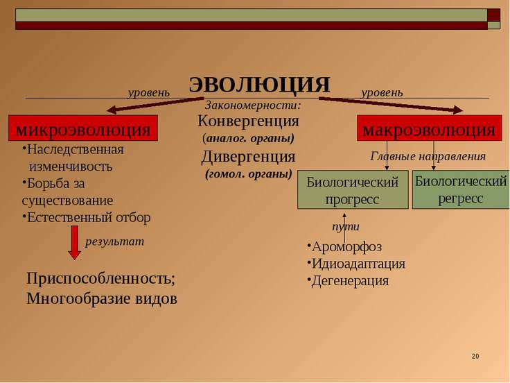 * ЭВОЛЮЦИЯ микроэволюция макроэволюция Конвергенция (аналог. органы) Диверген...