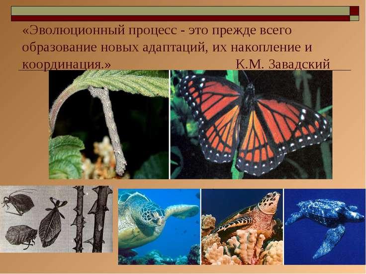 * «Эволюционный процесс - это прежде всего образование новых адаптаций, их на...