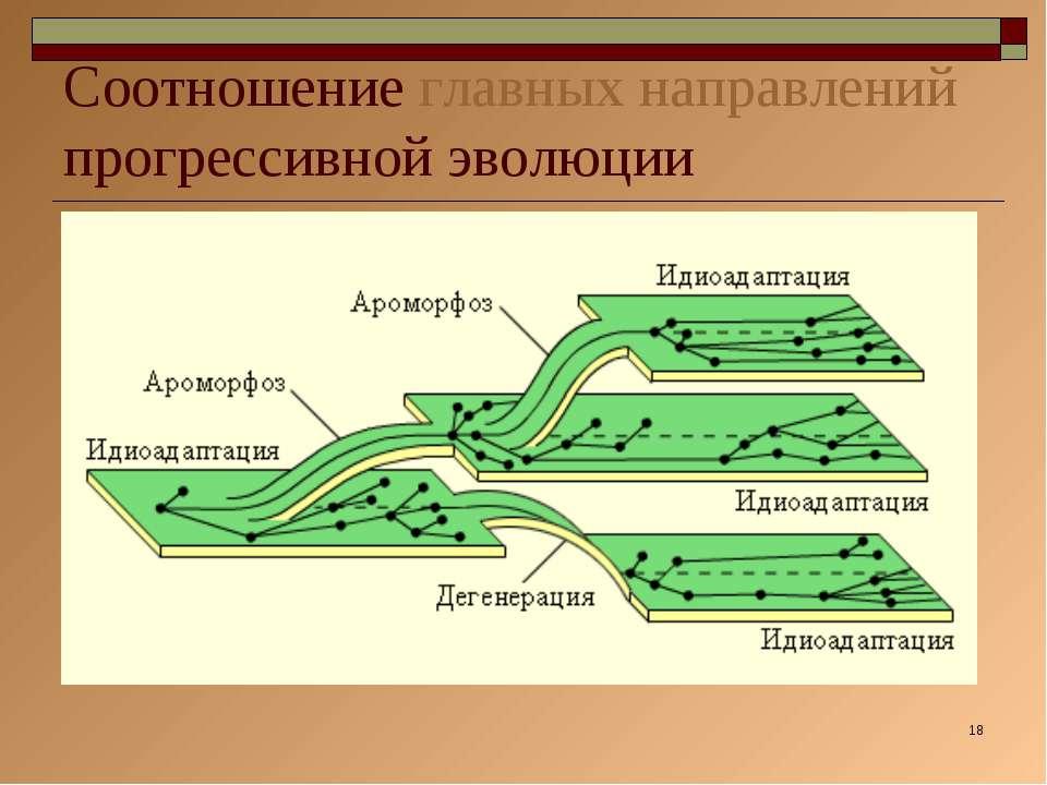 * Соотношение главных направлений прогрессивной эволюции