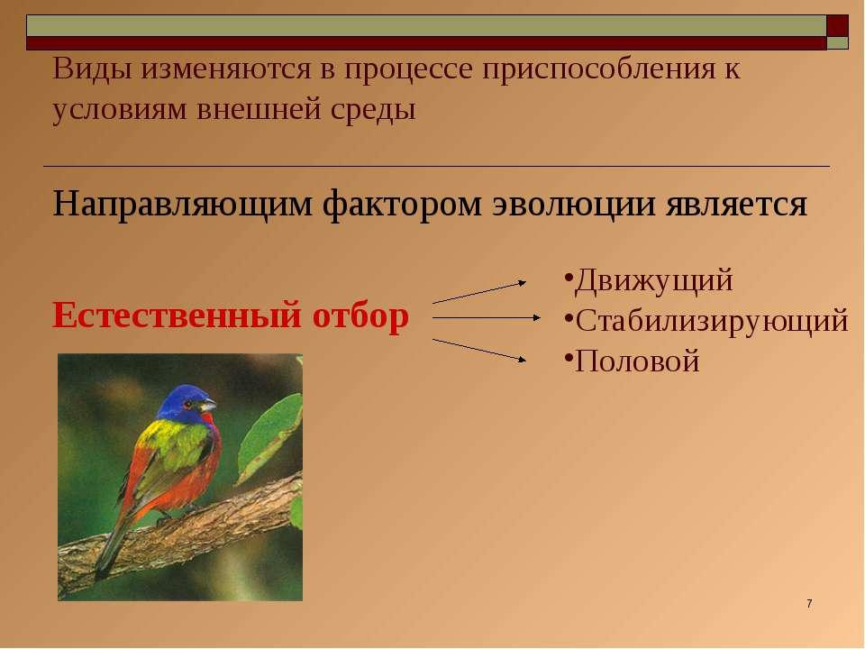 * Виды изменяются в процессе приспособления к условиям внешней среды Направля...