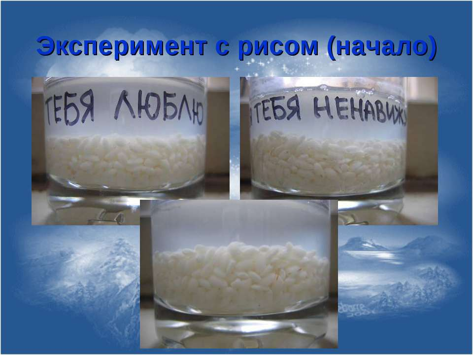 Эксперимент с рисом (начало)