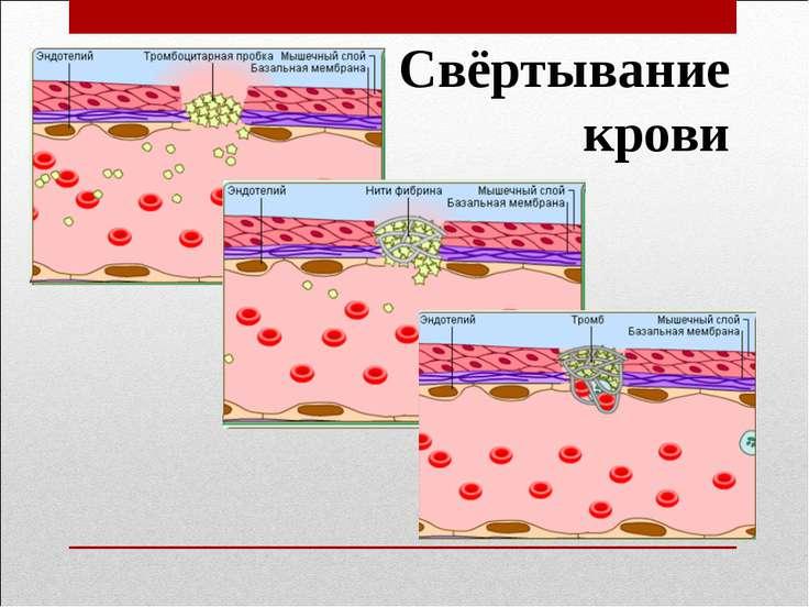 Свёртывание крови