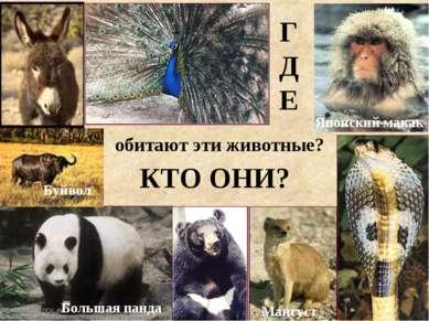 ГДЕ обитают эти животные? КТО ОНИ? Буйвол Большая панда Мангуст Японский макак