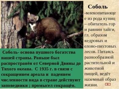 Соболь -млекопитающее из рода куниц – обитатель гор и равнин тайги, гл. образ...