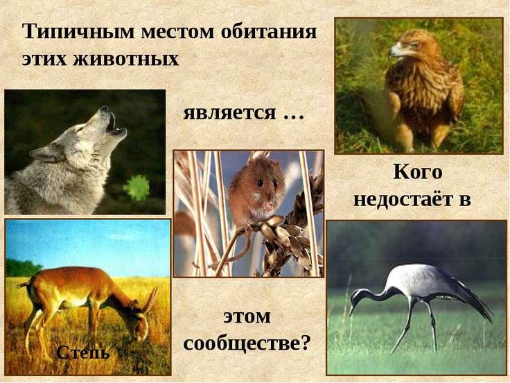Типичным местом обитания этих животных является … этом сообществе? Кого недос...