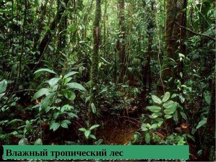 Место обитания этих животных -… Можете ли вы назвать других животных – обитат...