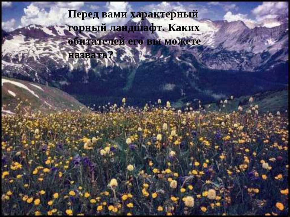 А в какой части Евразии живут они? бородач Ирбис Як Такин Винторогий козёл Пе...