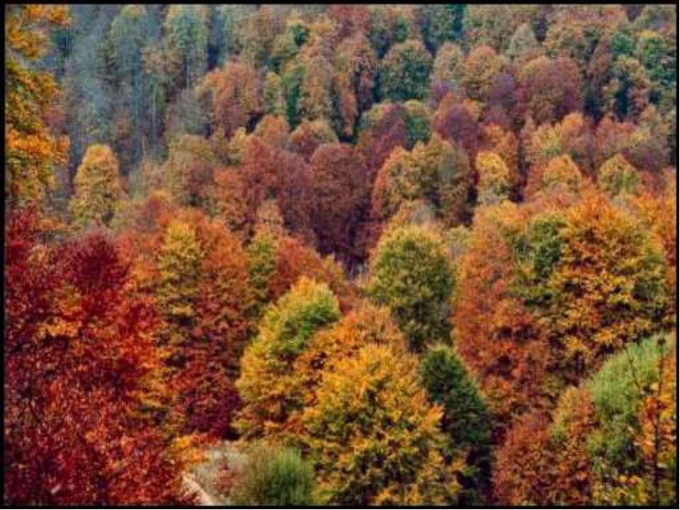 Знаете ли вы, что все эти животные – типичны для широколиственных лесов? Назо...
