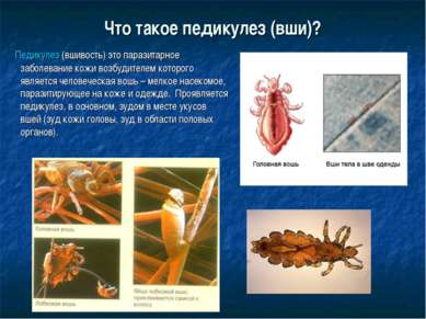 Что такое педикулез (вши)? Педикулез(вшивость) это паразитарное заболевание ...